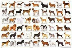 Dogs of The World Popular Breeds Chart Poster 36 x 24