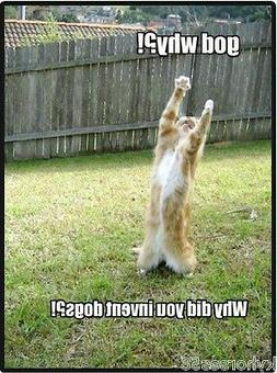 Funny Cat Humor Why Did You Invent Dogs Refrigerator Magnet