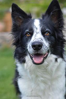 Happy Border Collie Dog Journal: 150 Page Lined Notebook/Dia