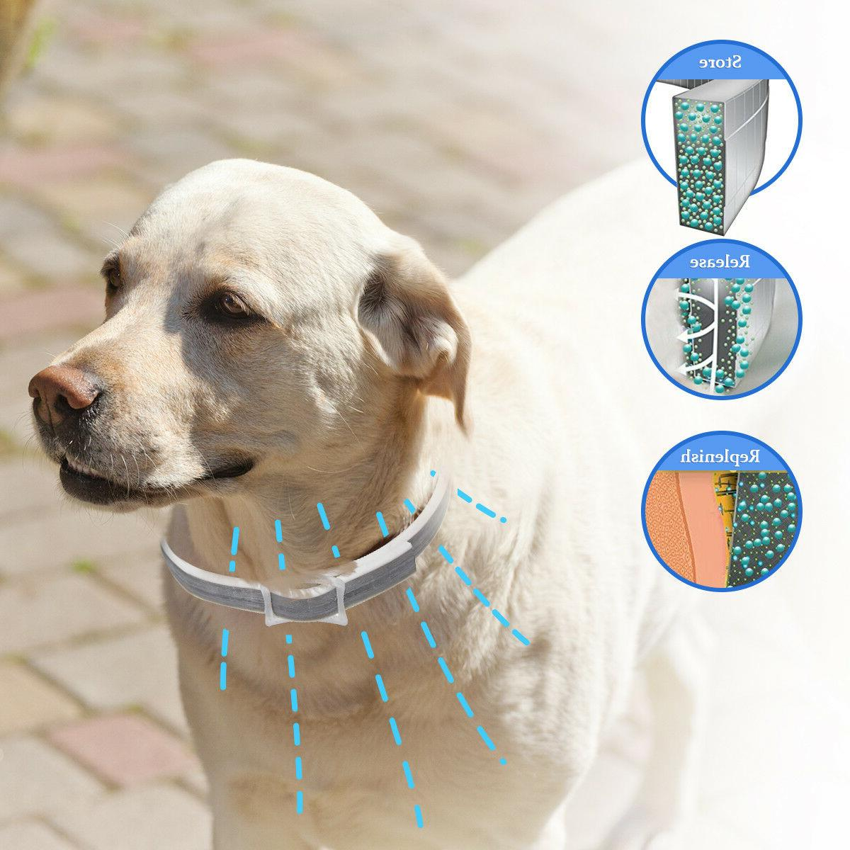 4x Pet Flea Months Collar All Sizes Dogs