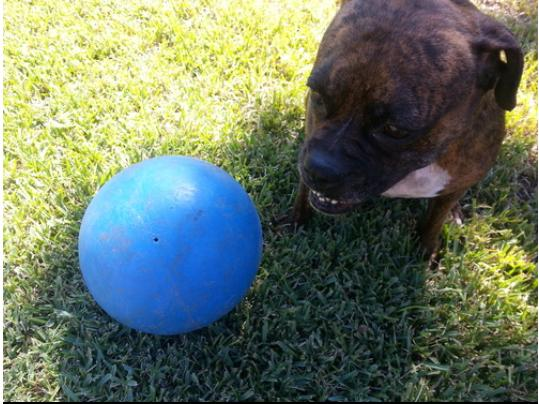 Ball For Dog Energetic Herding Fun 10 Pet Supplies Color May