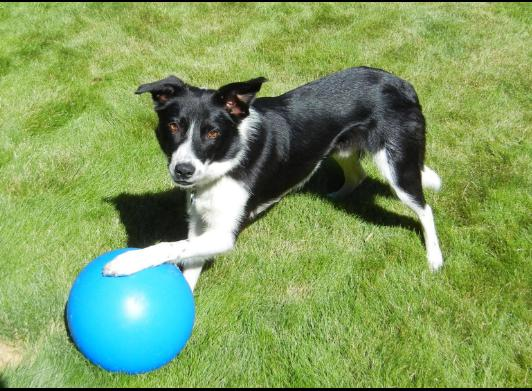 Ball For Ball Energetic Fun 10 Inch Color