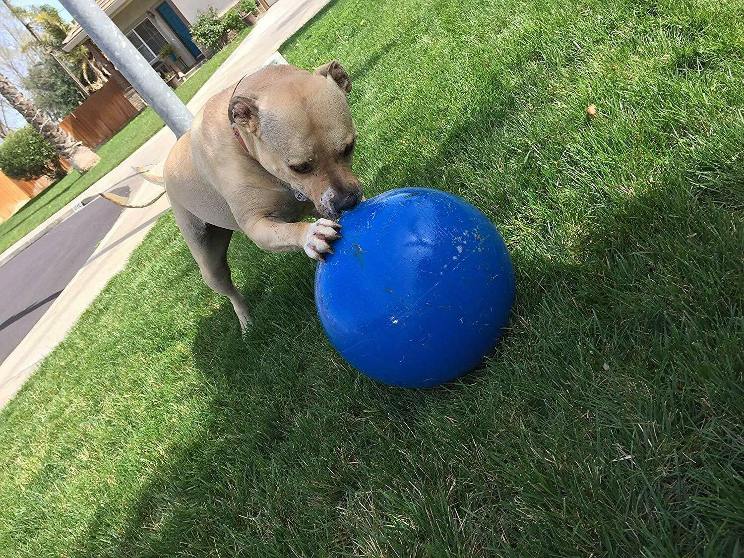 Ball For Energetic 10 Inch Color May Vary