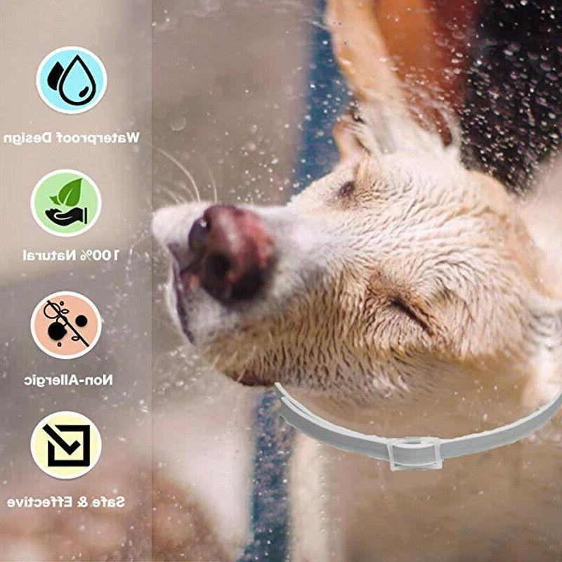 Bayer Flea&Tick Protection for Large Dogs 8