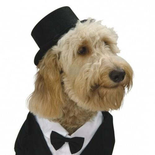 Dapper Dog Pet