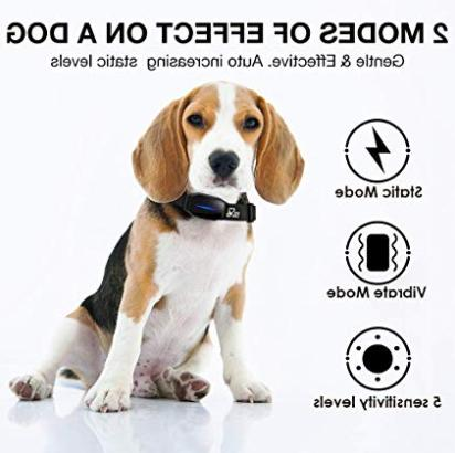 DOG CARE - Effective Collar for &Automatic