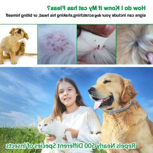 Dog and Months Flea and Tick Control