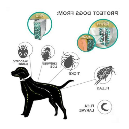 Control Months Flea Tick Control for