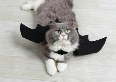 Halloween Bat Wings Costumes Apparel and Cats