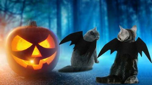 Halloween Bat Costumes Apparel for Dogs and Cats