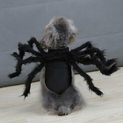 Halloween Spider Pet Cool Party