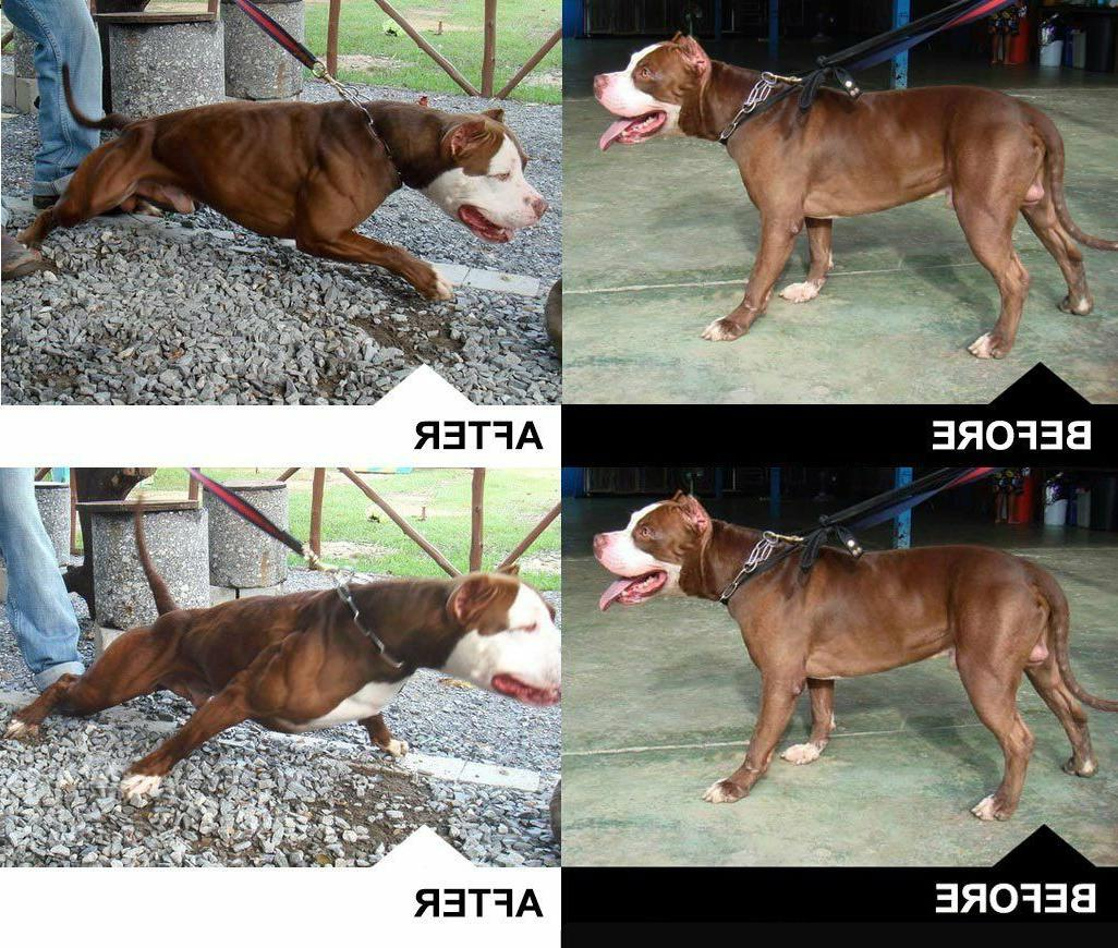 Bully Max Muscle Builder for Dogs. — Supplier. Guaranteed