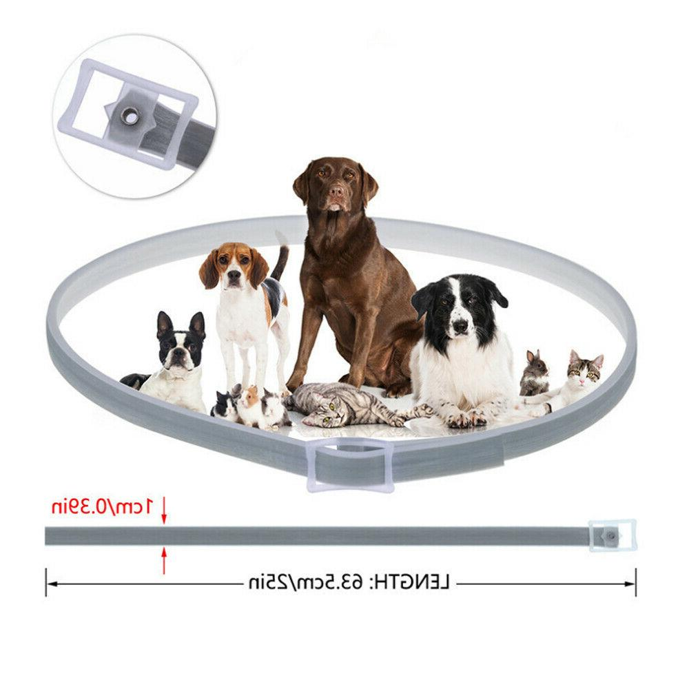 Natural and Collar for Large Dogs 8 Control PACK