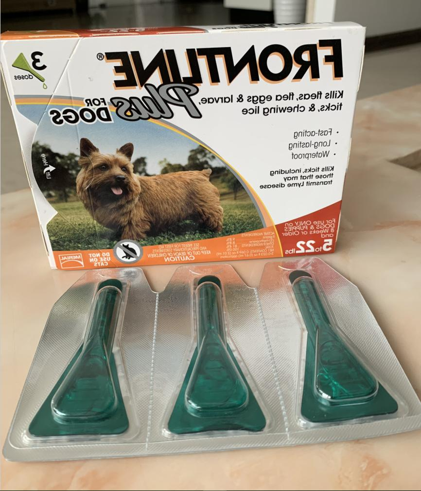 plus for small dogs puppies 5 22