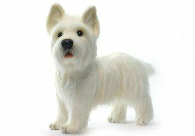"""Standing West Highland Terrier Reproduction 20"""""""