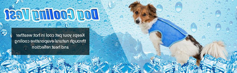 Summer Cool For Adidog