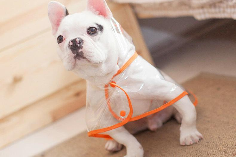 Transparent For Pet Jacket Cute Casual Waterproof Clothes