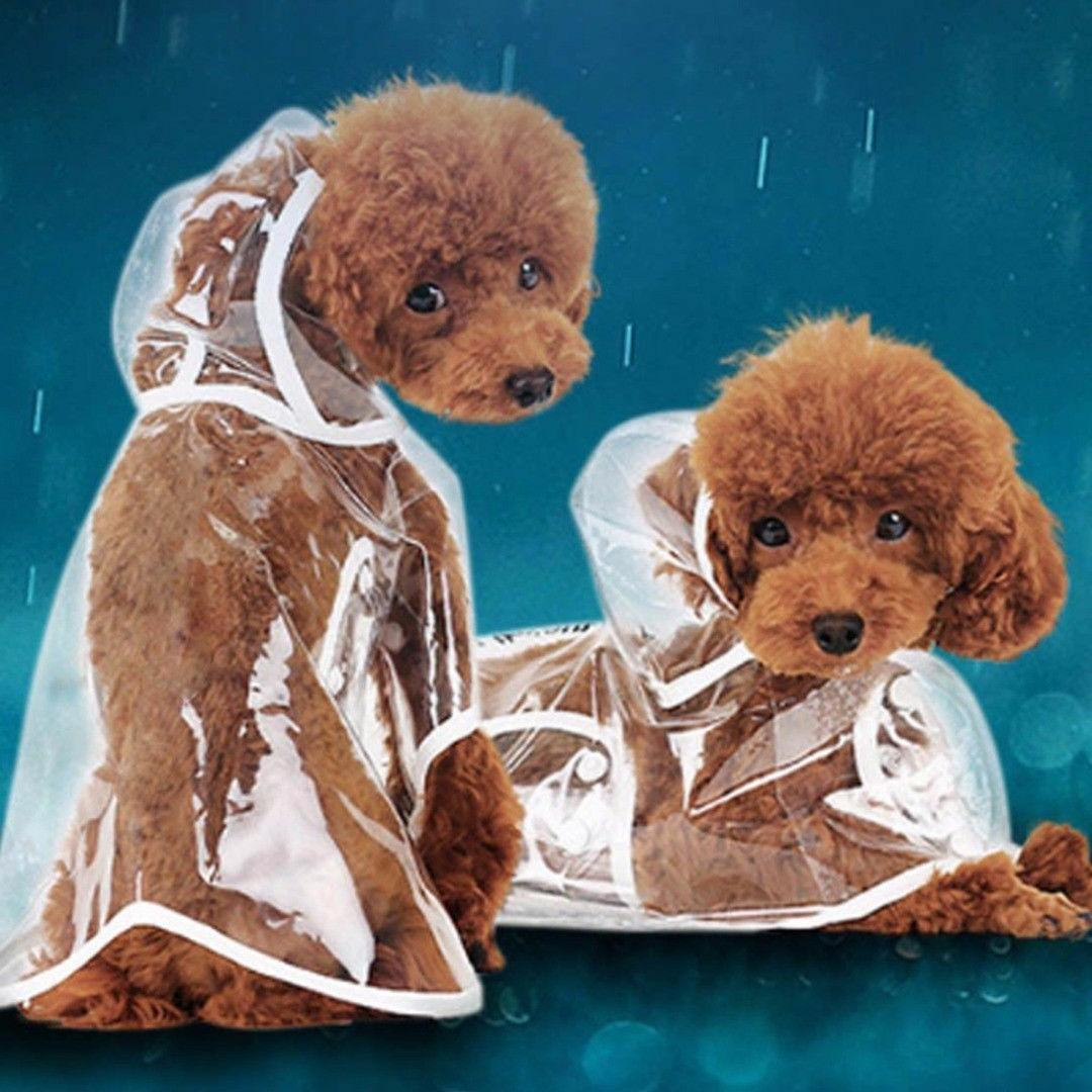 Transparent Pet For Dogs Pet Cute Waterproof Dog Clothes