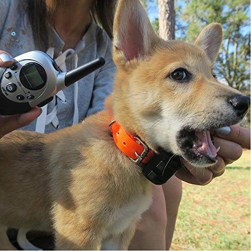 PetSpy Waterproof Rechargeable Remote Training Collar and 2 Dogs